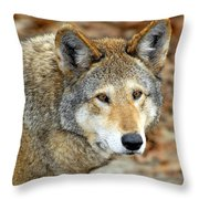 Red Wolf Portrait Throw Pillow