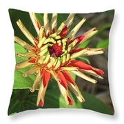 Red Zinnia- Early Bloom Throw Pillow