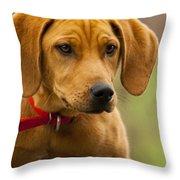 Redbone Coonhound - Man's Best Friend The Hound Dog Throw Pillow