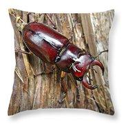 Reddish-brown Stag Beetle - Lucanus Capreolus Throw Pillow