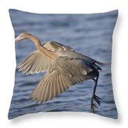 Reddish Egret Dance Fishing Throw Pillow