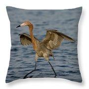 Reddish Egret Doing Fishing Dance Throw Pillow
