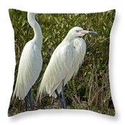 Reddish Egret Egretta Rufescens Pair Throw Pillow