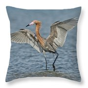 Reddish Egret Fishing Throw Pillow