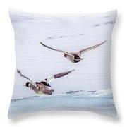 Redhead And  Merganser Ducks Throw Pillow
