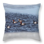 Redhead And Scaups Ducks Throw Pillow