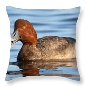 Redhead Duck At St. Mark's Throw Pillow