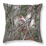 Redpoll And Pine Siskin Throw Pillow