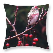 Redpoll On Crabapple Tree Throw Pillow