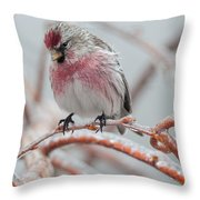 Redpoll Shy Pose Throw Pillow