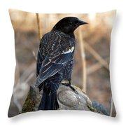 Redwing Blackbird Throw Pillow