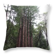 Redwood Fairy Ring Throw Pillow