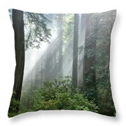 Redwood Forest With Sunbeams Throw Pillow