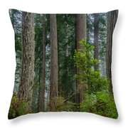 Redwood Lineup Throw Pillow