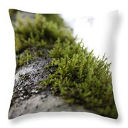 Redwood Branches Throw Pillow