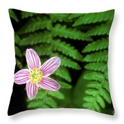 Redwood Sorrel Wildflower Nestled In Ferns Throw Pillow