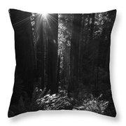 Redwood Sunburst Monochrome Throw Pillow