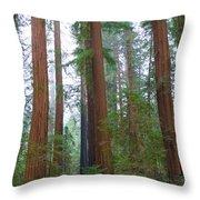 Redwood Trees Throw Pillow