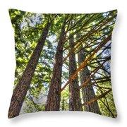 Redwoods 3 Big Basin Throw Pillow