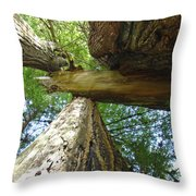 Redwoods Forest Art Prints Canvas Framed Redwood Trees Throw Pillow