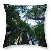 Redwoods II Throw Pillow