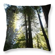 Redwoods IIII Throw Pillow