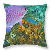 Reef Life Throw Pillow by John Malone