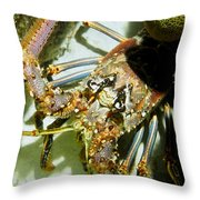 Reef Lobster Close Up Spotlight Throw Pillow