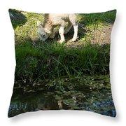 Reflected Cute Little Lamb Throw Pillow