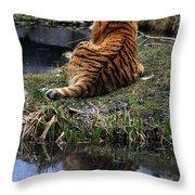 Reflecting Stripes Throw Pillow