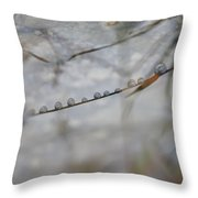 Reflection Of Drops Clinging To Grass Throw Pillow