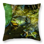 Reflections Of A Bullfrog Throw Pillow