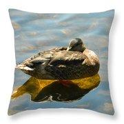 Reflective Mallard Resting Throw Pillow