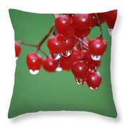 Reflective Red Berries  Throw Pillow