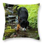 Refreshing Stream Throw Pillow
