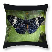 Regal Blue Butterfly Throw Pillow