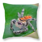 Regal Jumping Spider Throw Pillow