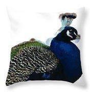 Regal Peacock Throw Pillow