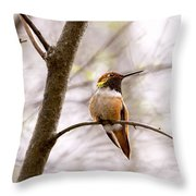 Regal Rufous Hummingbird Sitting Throw Pillow