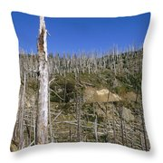Regrowth Since Eruption Mt Saint Helens Throw Pillow