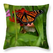 Regular Visitor Throw Pillow
