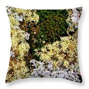 Reindeer Moss And Lichens Throw Pillow
