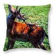Reindeer Scratch Throw Pillow