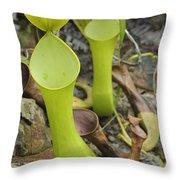 Reinwardts Pitcher Plant Sarawak Borneo Throw Pillow