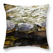 Relaxin' Turtles Throw Pillow