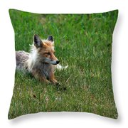 Relaxing Red Fox Throw Pillow