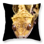 Reptile Close Up On Black Throw Pillow