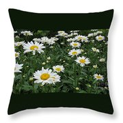 Requested Daisies Throw Pillow