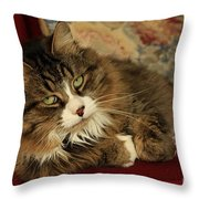 Rescue Cat Living In The Lap Of Luxury Throw Pillow