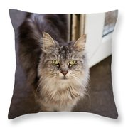 Rescue Cat Looks For Forever Home Throw Pillow